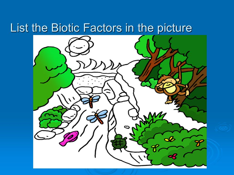 List the Biotic Factors in the picture
