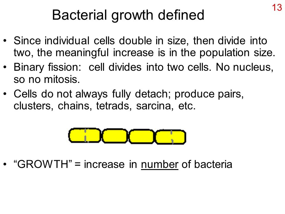 Bacterial growth defined
