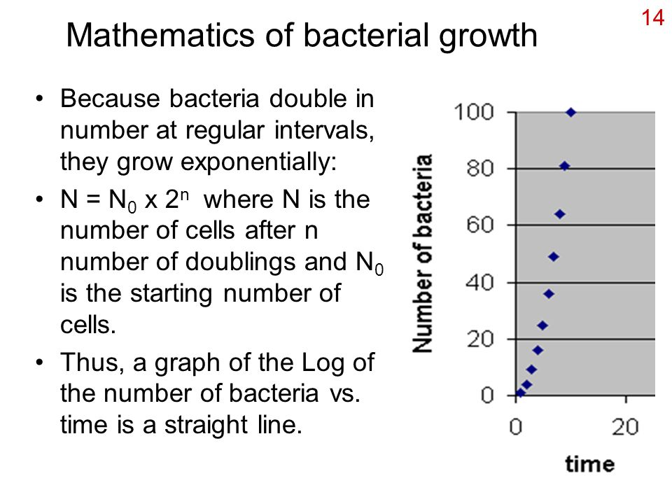 Mathematics of bacterial growth