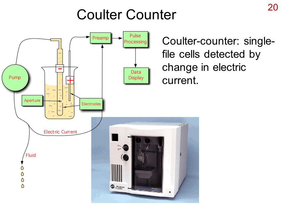 Coulter Counter Coulter-counter: single-file cells detected by change in electric current.