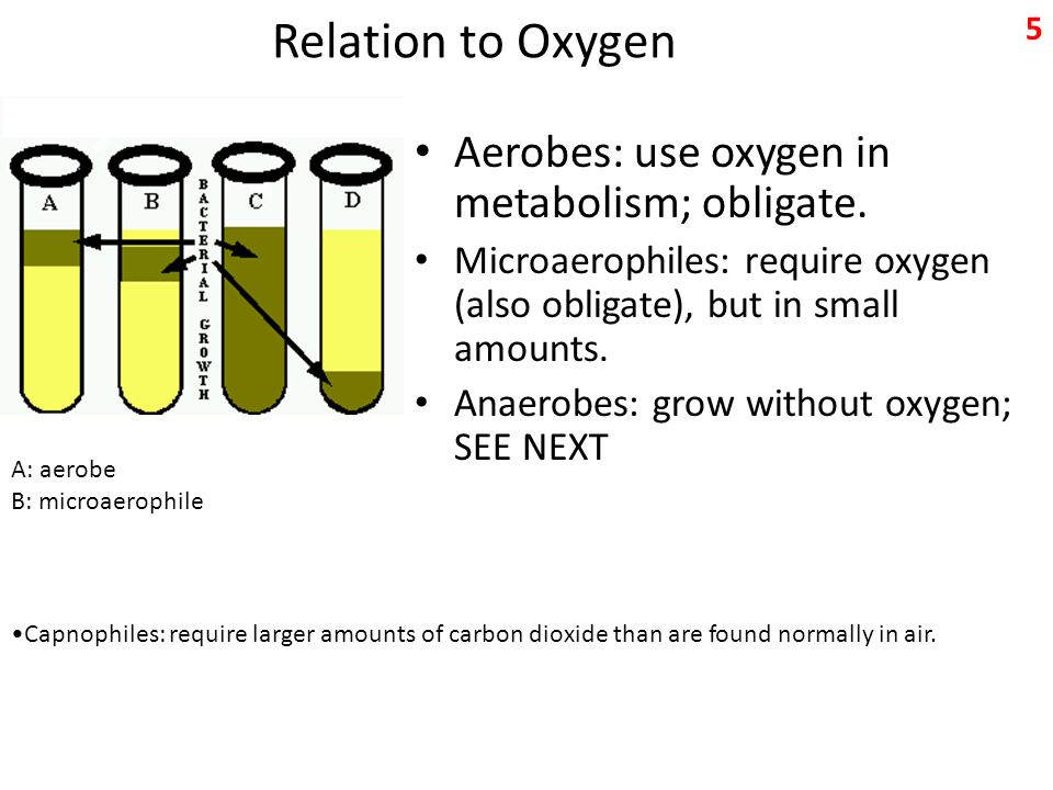 Relation to Oxygen Aerobes: use oxygen in metabolism; obligate.