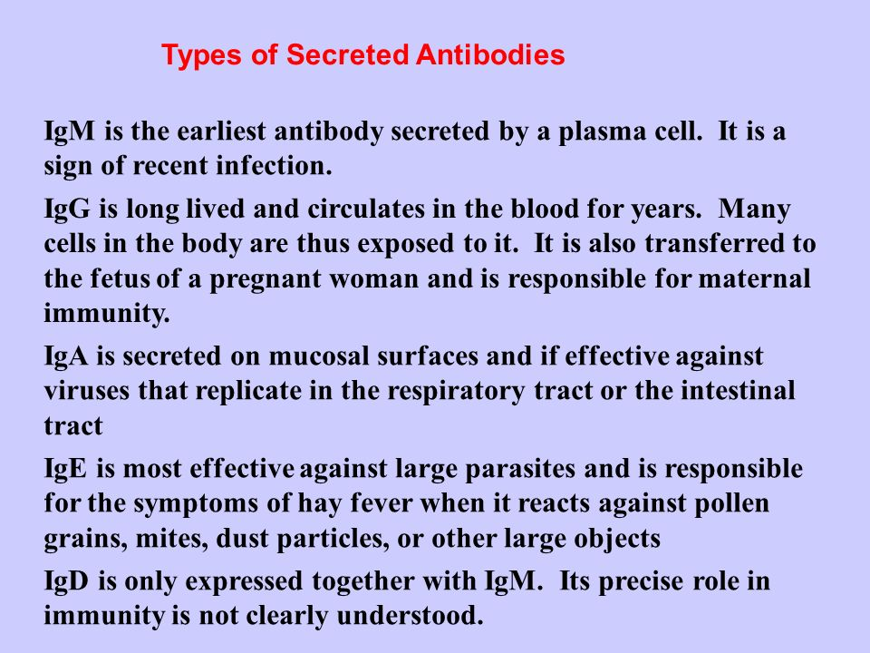 Types of Secreted Antibodies
