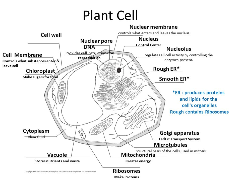 studying the structure of cells The biology project  cell biology  studying cells  problems studying cells tutorial size and biology sizes of cells, viruses, and other small things.