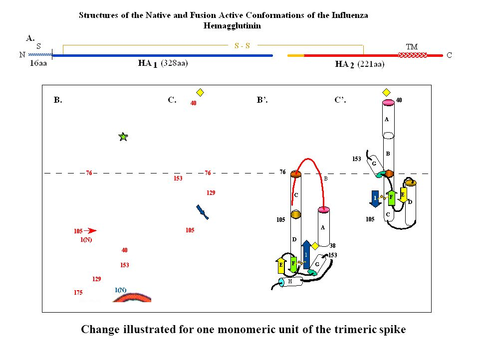 Change illustrated for one monomeric unit of the trimeric spike