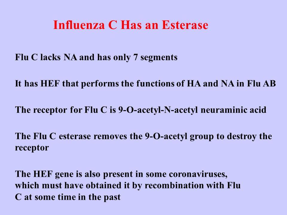 Influenza C Has an Esterase