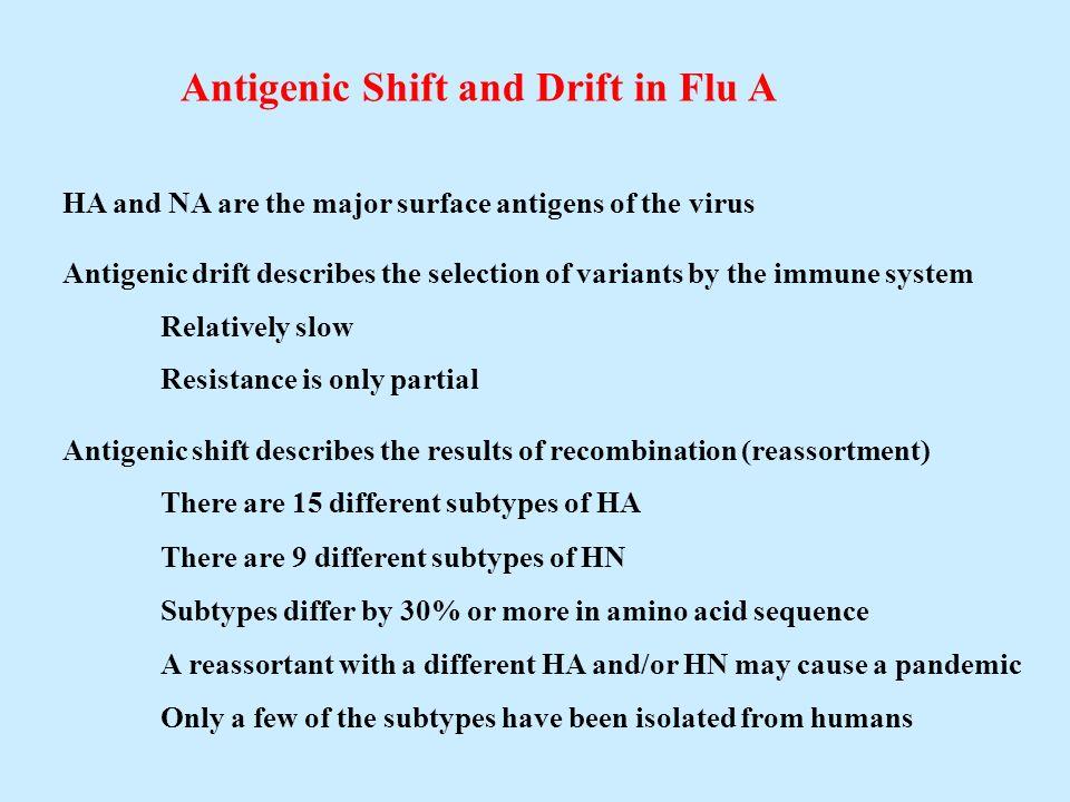 Antigenic Shift and Drift in Flu A