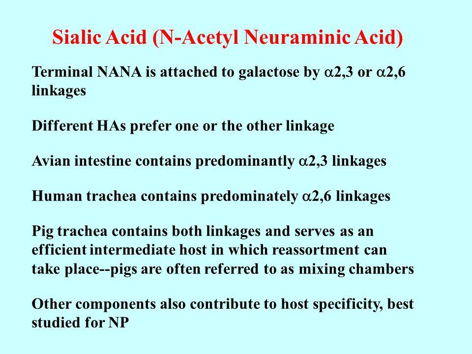 Sialic Acid (N-Acetyl Neuraminic Acid)