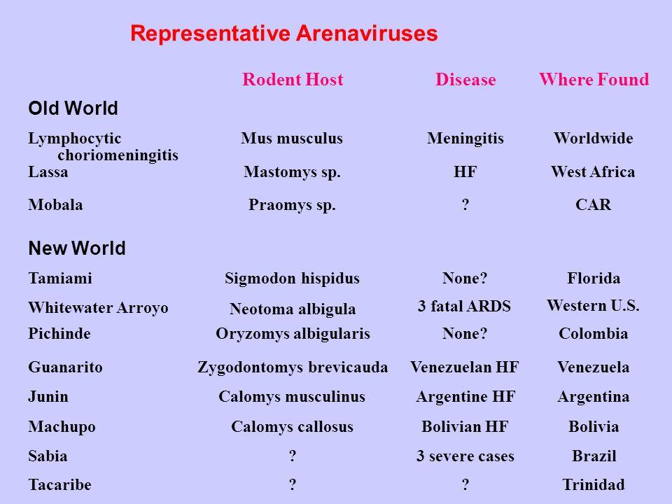 Representative Arenaviruses