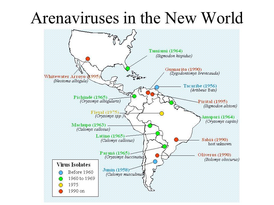 Arenaviruses in the New World