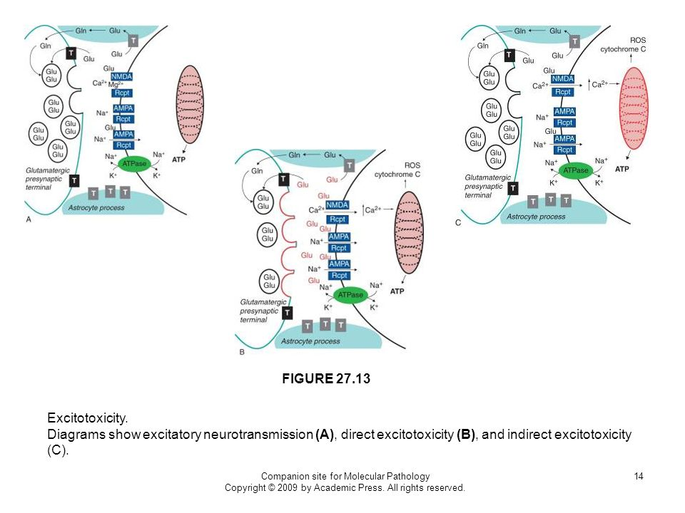 FIGURE 27.13 Excitotoxicity.