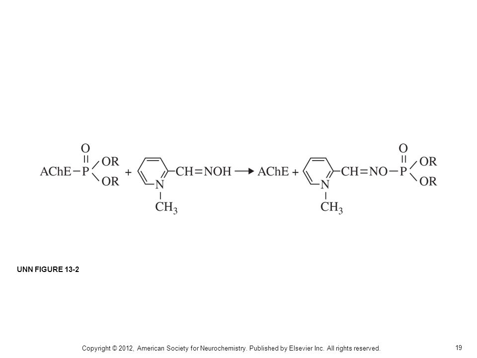 UNN FIGURE 13-2 Copyright © 2012, American Society for Neurochemistry.