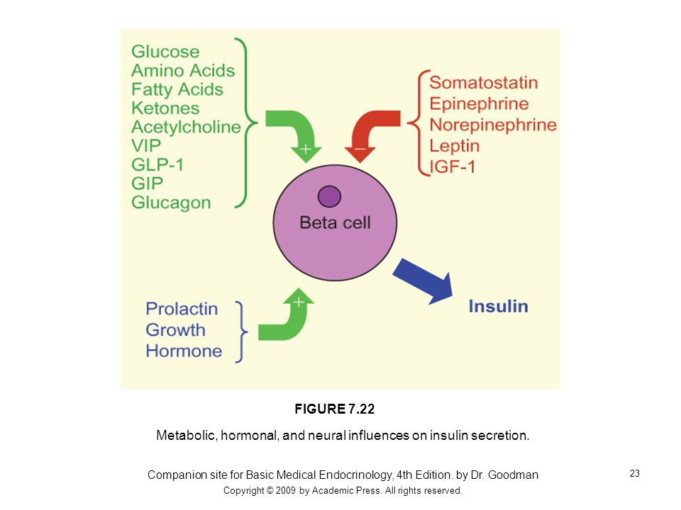 Metabolic, hormonal, and neural influences on insulin secretion.