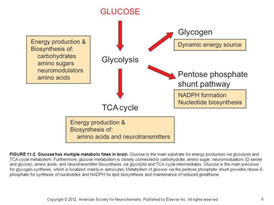 FIGURE 11-2: Glucose has multiple metabolic fates in brain
