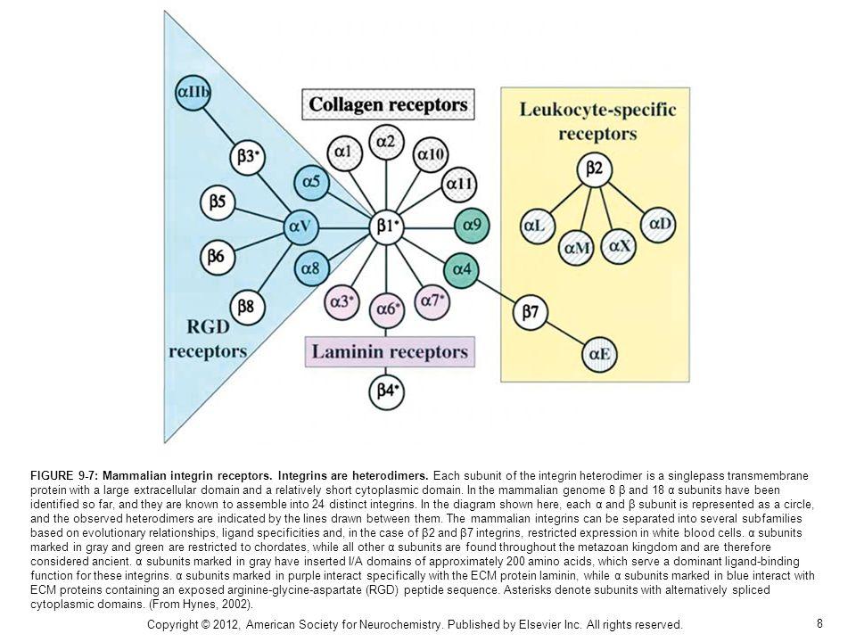 FIGURE 9-7: Mammalian integrin receptors. Integrins are heterodimers