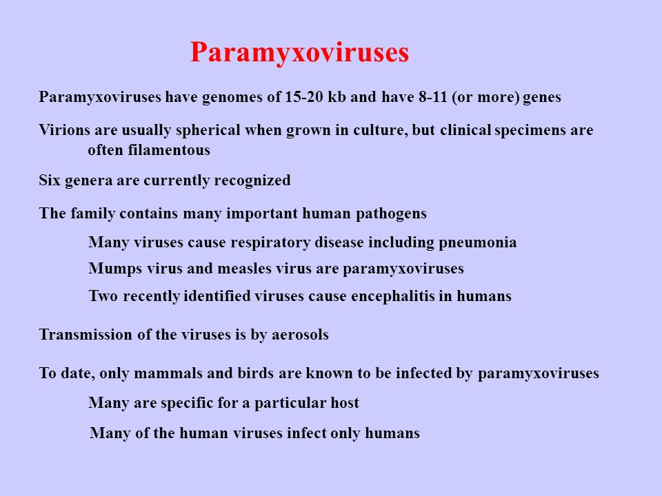 Paramyxoviruses Paramyxoviruses have genomes of 15-20 kb and have 8-11 (or more) genes.