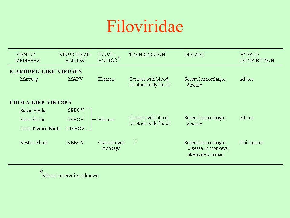 Filoviridae