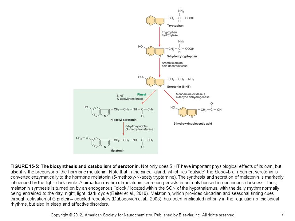 FIGURE 15-5: The biosynthesis and catabolism of serotonin