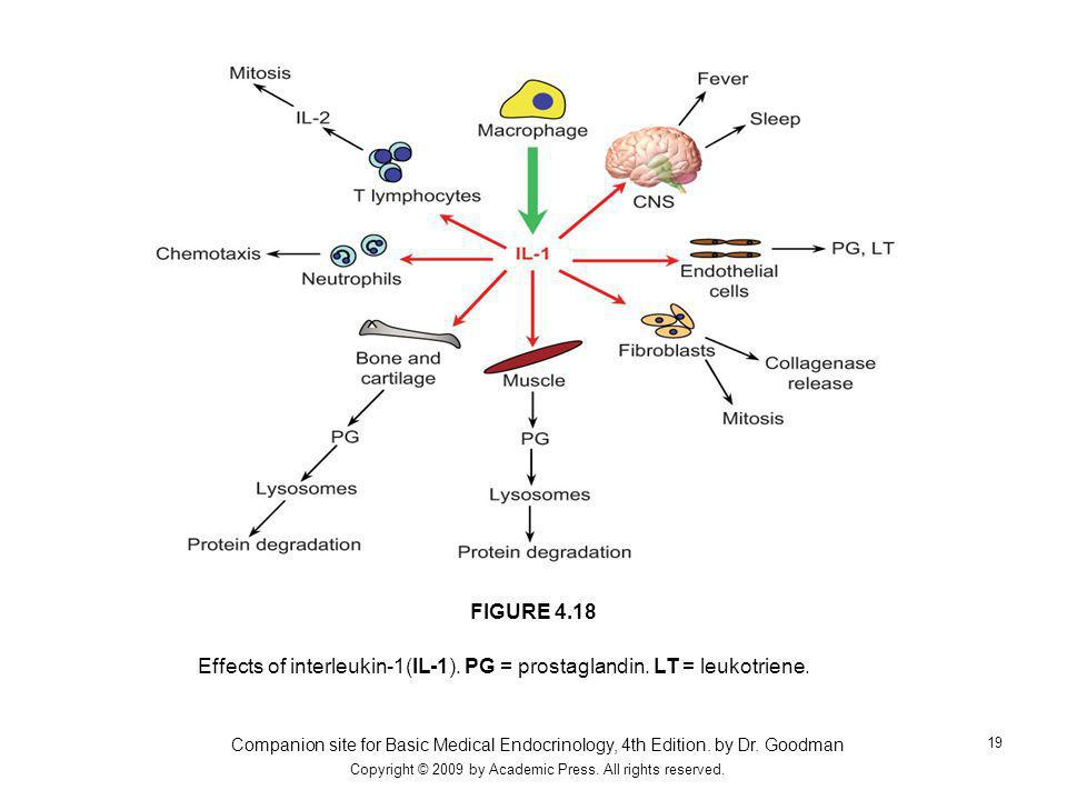 Effects of interleukin-1(IL-1). PG = prostaglandin. LT = leukotriene.