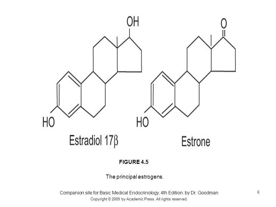 The principal estrogens.