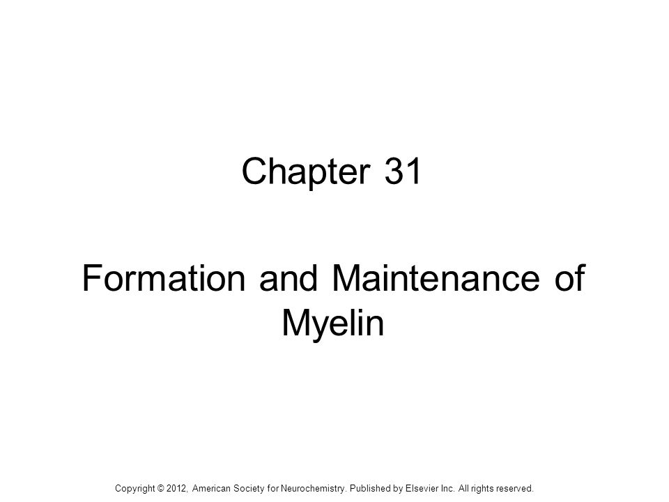 Formation and Maintenance of Myelin