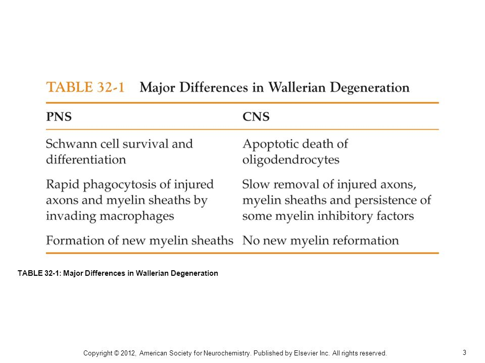 TABLE 32-1: Major Differences in Wallerian Degeneration