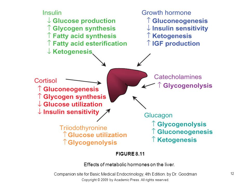 Effects of metabolic hormones on the liver.