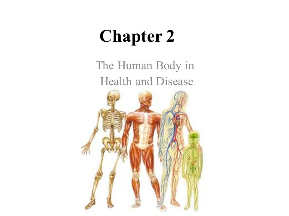 the human body in health and disease - ppt video online download, Muscles