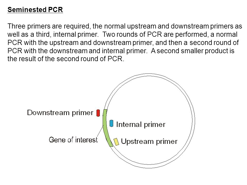 Seminested PCR