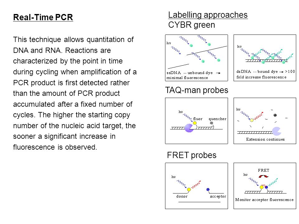 Labelling approaches Real-Time PCR CYBR green TAQ-man probes