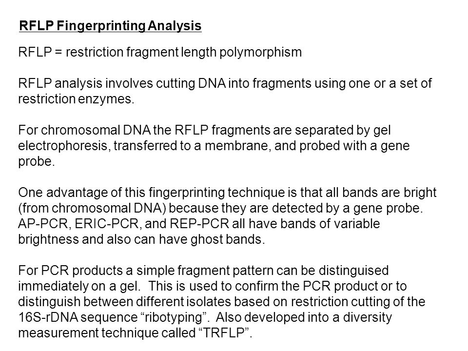 RFLP Fingerprinting Analysis