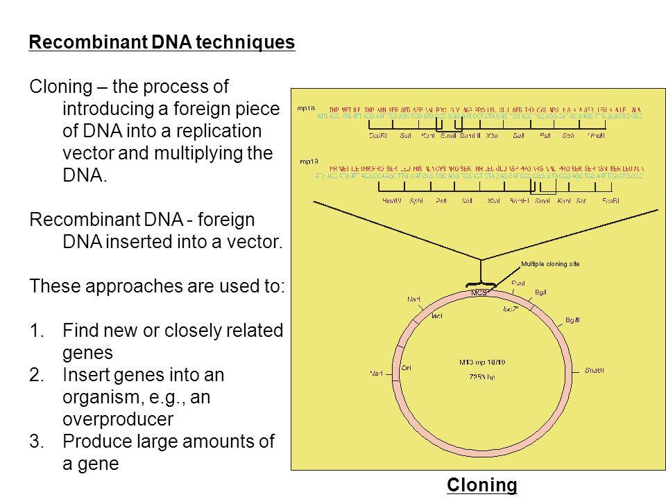 Recombinant DNA techniques