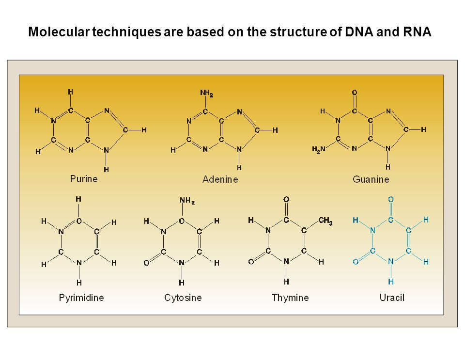 Molecular techniques are based on the structure of DNA and RNA