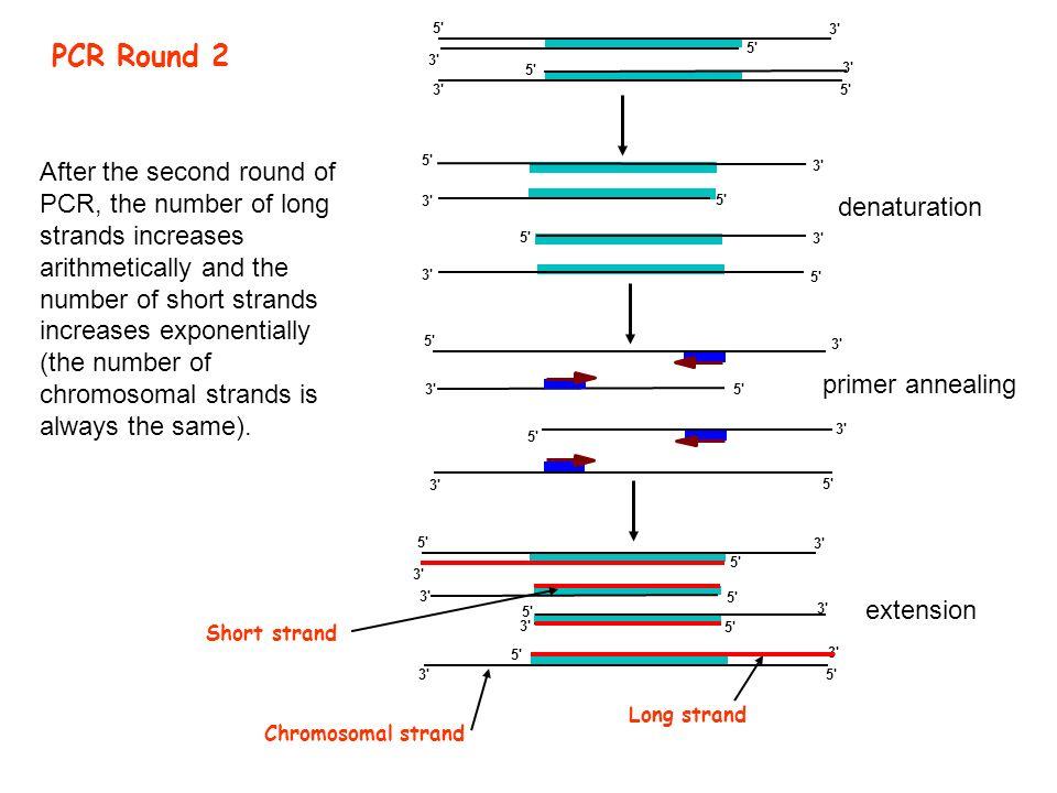3 5 PCR Round 2. 5 3