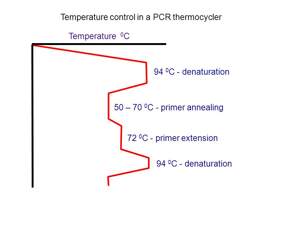 Temperature control in a PCR thermocycler