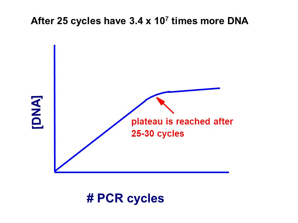 [DNA] # PCR cycles After 25 cycles have 3.4 x 107 times more DNA