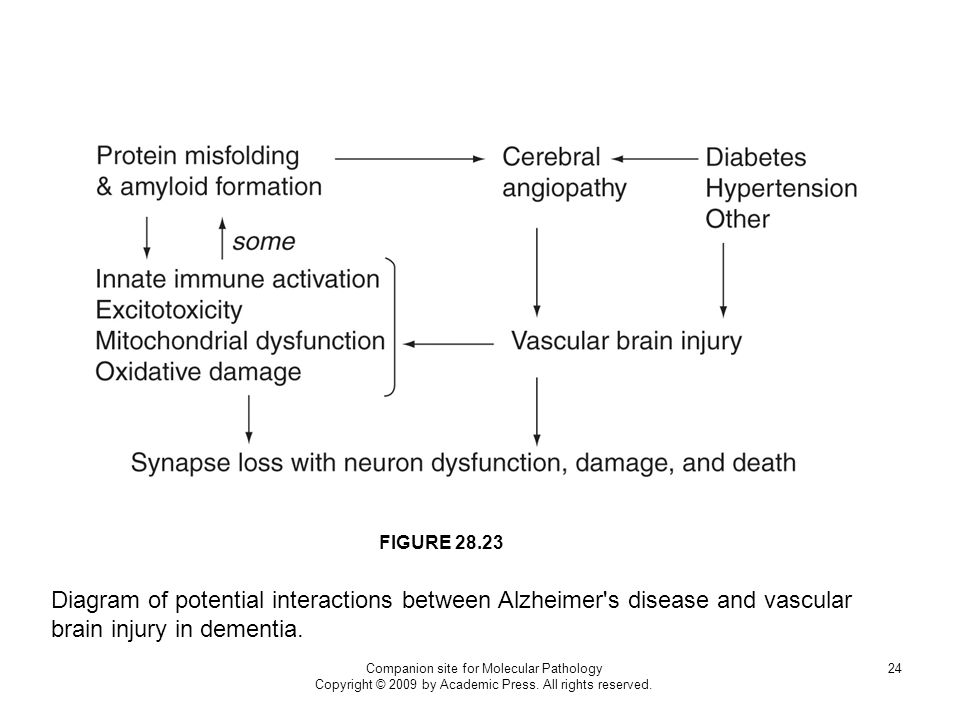 FIGURE 28.23 Diagram of potential interactions between Alzheimer s disease and vascular brain injury in dementia.