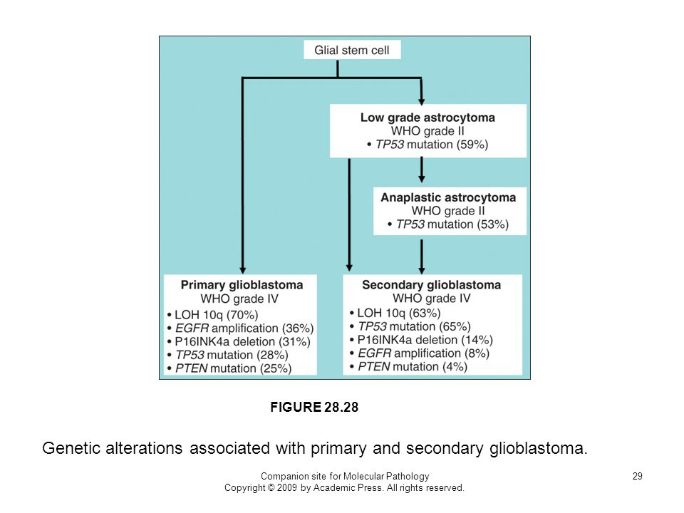 FIGURE 28.28 Genetic alterations associated with primary and secondary glioblastoma. Companion site for Molecular Pathology.
