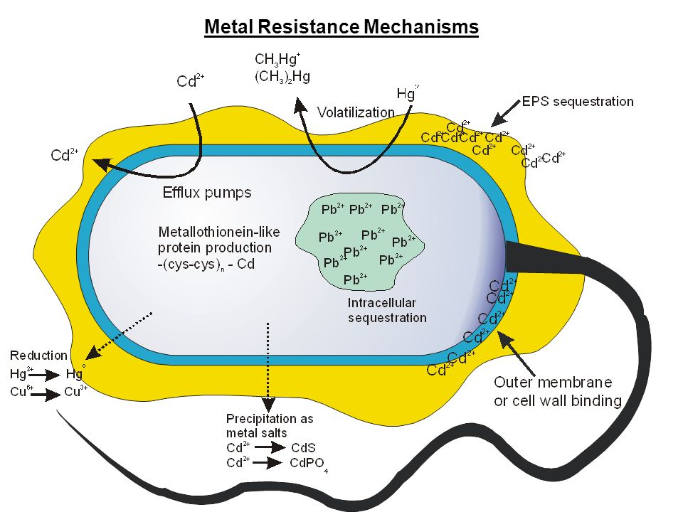 Metal Resistance Mechanisms