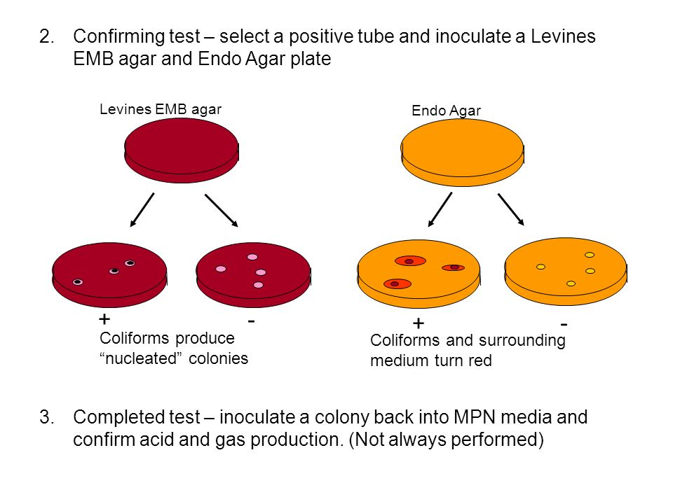 Confirming test – select a positive tube and inoculate a Levines EMB agar and Endo Agar plate