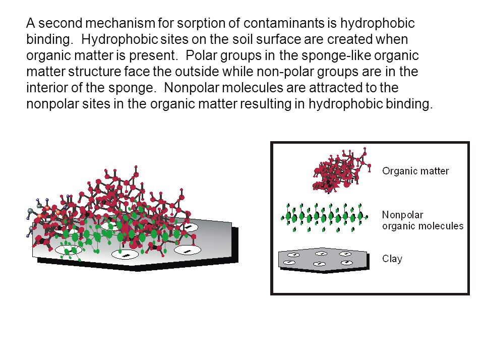A second mechanism for sorption of contaminants is hydrophobic binding