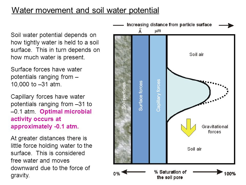 Water movement and soil water potential