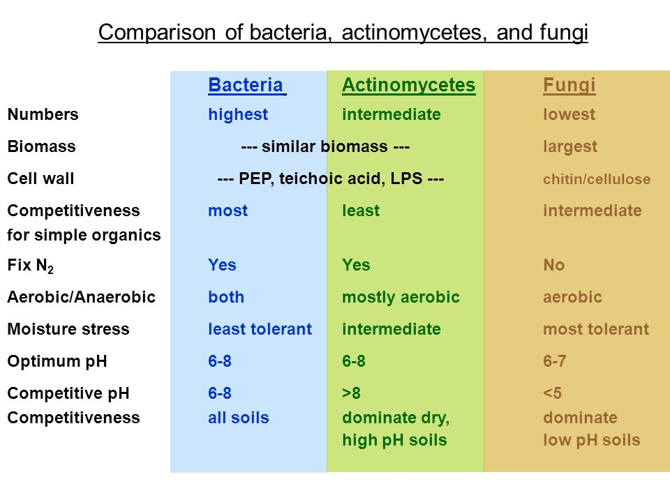 Comparison of bacteria, actinomycetes, and fungi