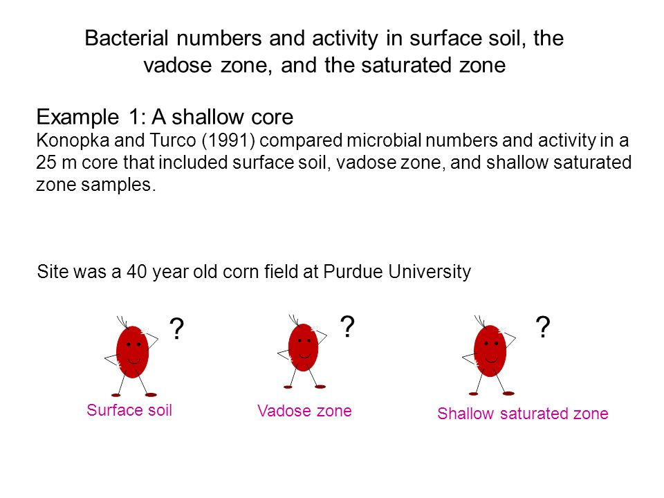 Bacterial numbers and activity in surface soil, the vadose zone, and the saturated zone