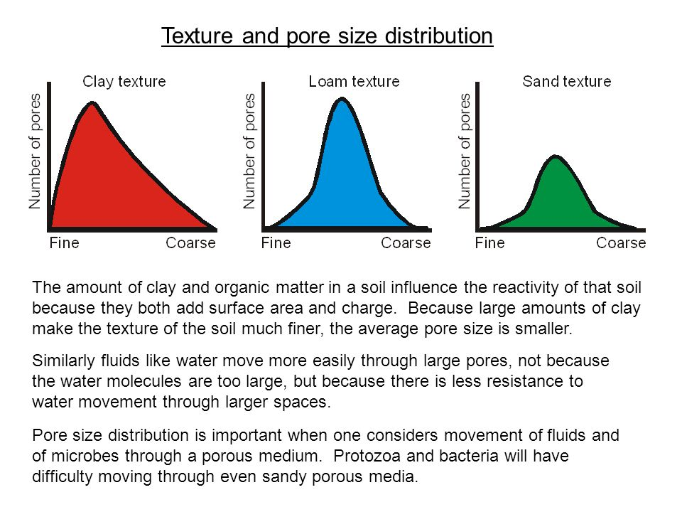 Texture and pore size distribution