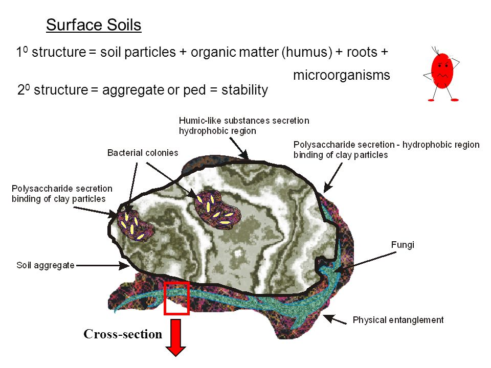 Surface Soils 10 structure = soil particles + organic matter (humus) + roots + microorganisms. 20 structure = aggregate or ped = stability.