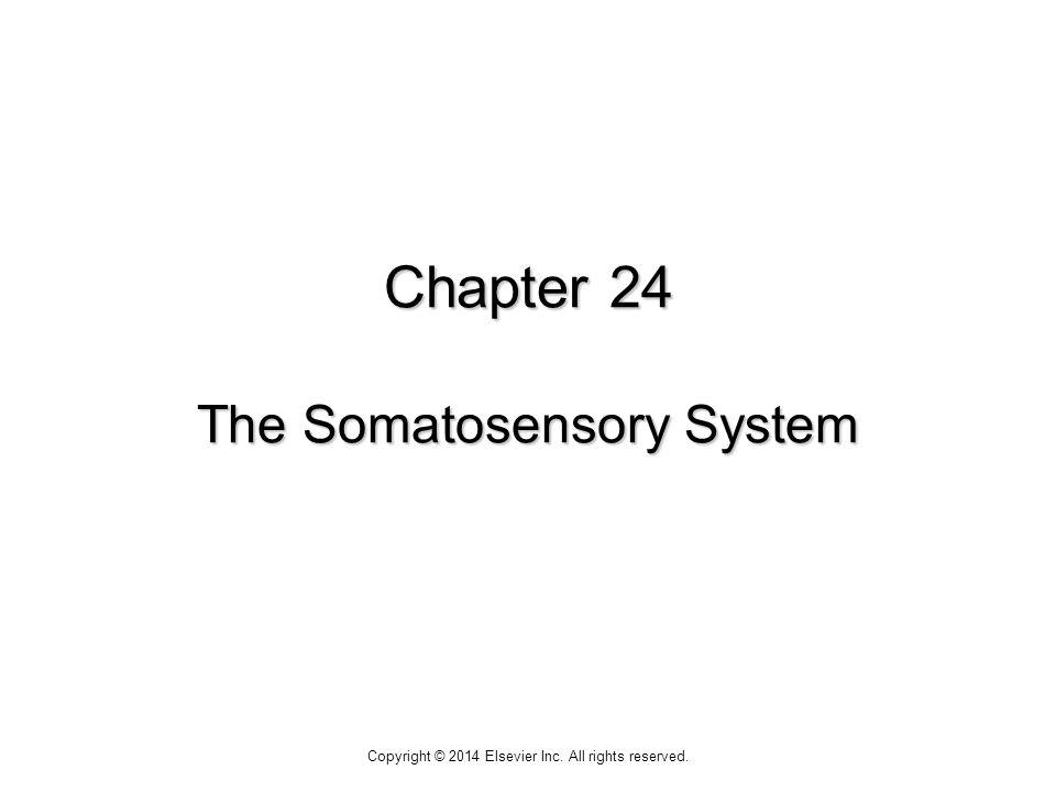 Chapter 24 The Somatosensory System