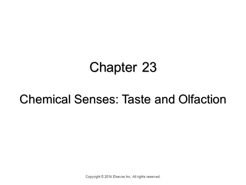Chapter 23 Chemical Senses: Taste and Olfaction