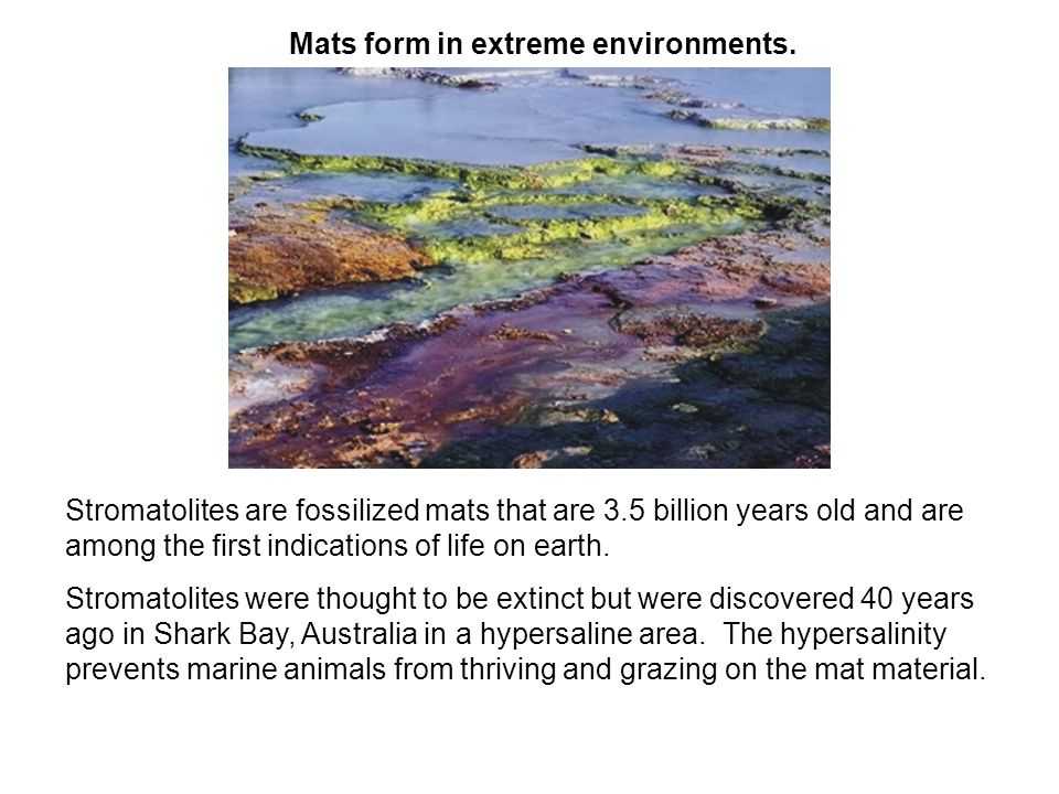 Mats form in extreme environments.