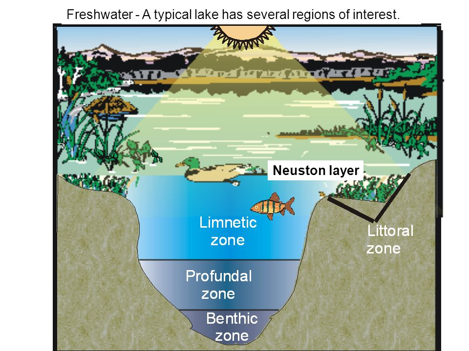 Freshwater - A typical lake has several regions of interest.