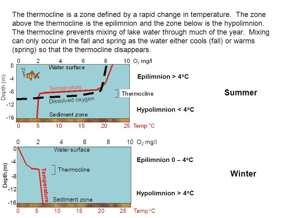 The thermocline is a zone defined by a rapid change in temperature